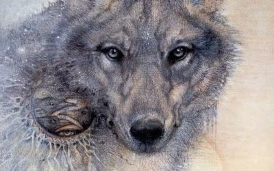What Do You Feed (and Why)? Story of Wolf.