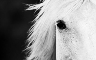 Storytime: Finding The Nameless Horse